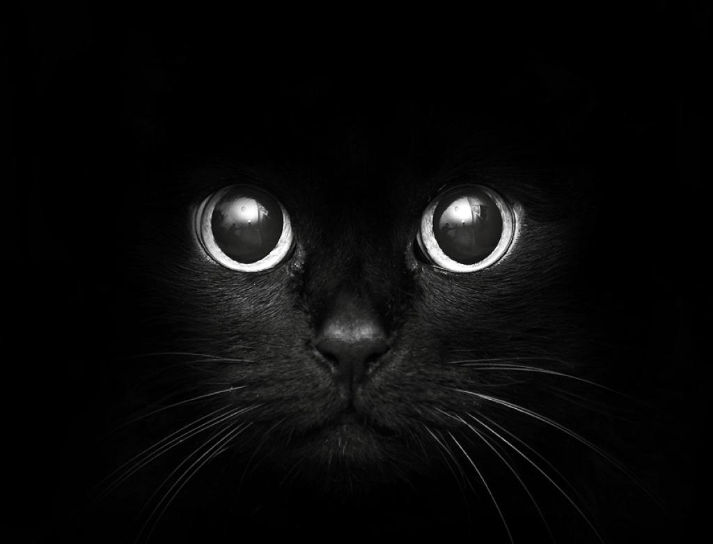 картинки чёрные котики
