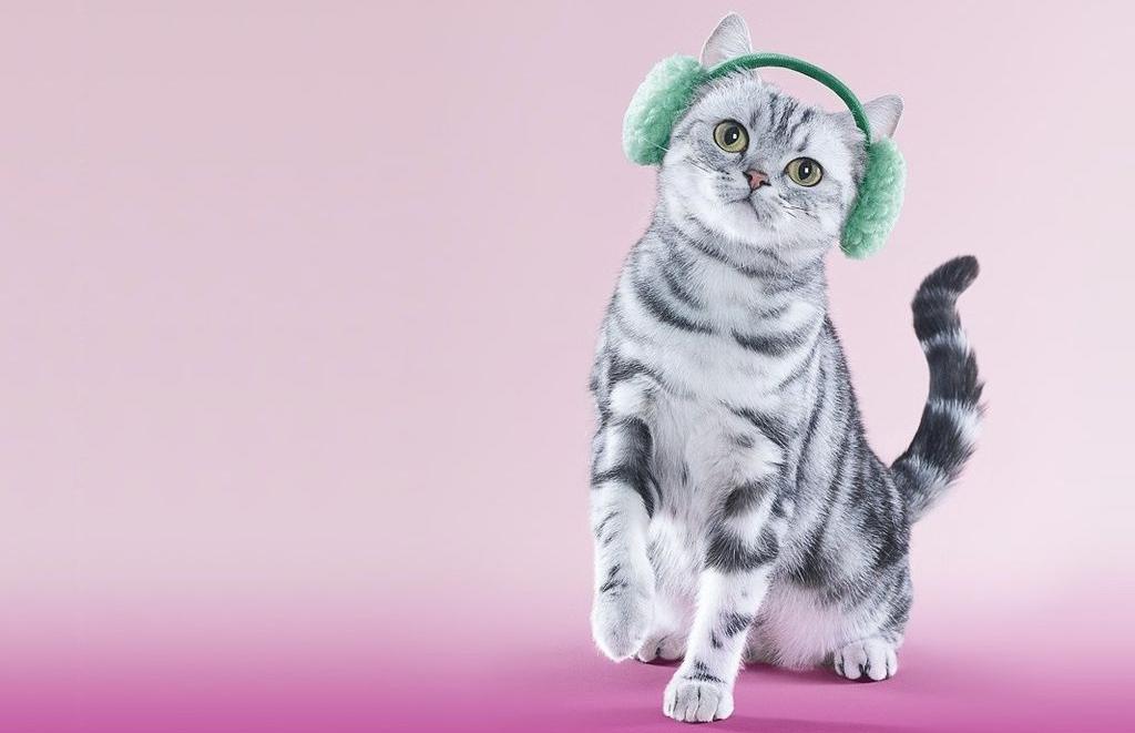 Картинки котик в наушниках
