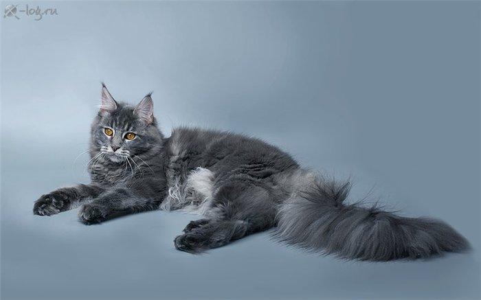 Картинки по запросу Дымчатая нежность от фотографа А.Соколовой