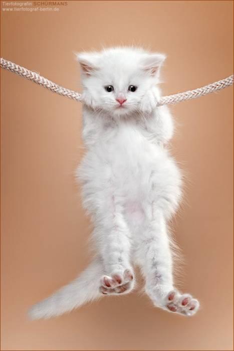 И кошками прикольные аватарки
