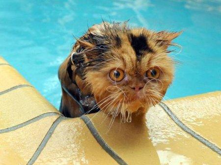 """Результат пошуку зображень за запитом """"мокрые кошки. анимашки"""""""
